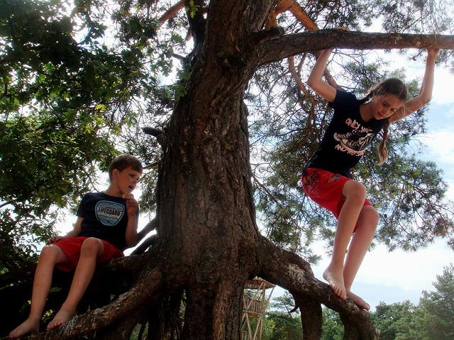 děti, lezení, strom